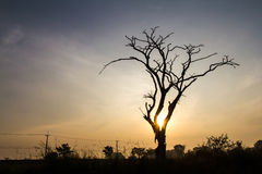 Silhouette dead tree Royalty Free Stock Photos