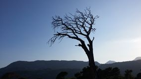 Silhouette of dead tree at sea coast Sunset time Royalty Free Stock Photos