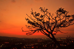 Silhouette dead tree Stock Photo