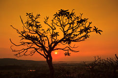 Silhouette dead tree Royalty Free Stock Photography