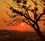 Silhouette dead tree Stock Photos