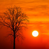 Silhouette dead tree at sunset Stock Images