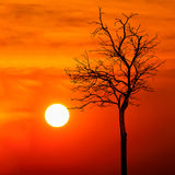 Silhouette dead tree at sunset Stock Photo