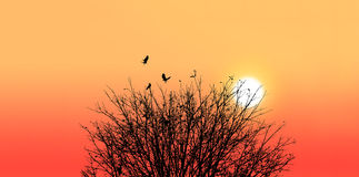Silhouette of a death tree with crow on sunset background Stock Images