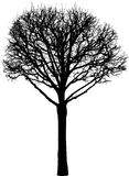 Silhouette of a deciduous tree in the winter Stock Photos