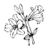 Silhouette of decorative lily Royalty Free Stock Photo