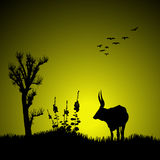 Silhouette of deer. Silhouette view  of a deer Stock Image
