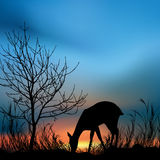 Silhouette of deer. Silhouette view of a deer Stock Photo