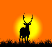 Silhouette of deer Stock Images