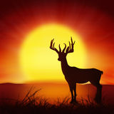 Silhouette of deer with big sun Stock Image