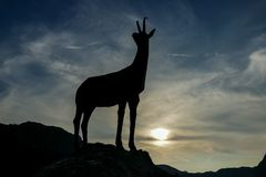 Silhouette of deer, digital photo picture as a background. Silhouette of deer, beautiful photo digital picture royalty free stock photography