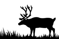 Silhouette of deer in the grass. Royalty Free Stock Photography