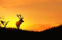 Silhouette of a deer Royalty Free Stock Photos
