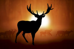 Silhouette of a deer in sunset Stock Photos