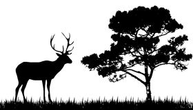 Silhouette of  deer and tree Royalty Free Stock Images