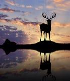 Silhouette of deer Stock Photo
