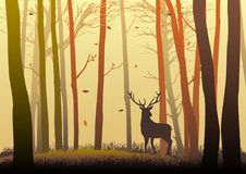 Silhouette of a deer. In the woods during autumn season Royalty Free Stock Image