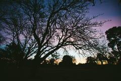 Silhouette des arbres Images stock