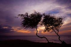 Silhouette des arbres au coucher du soleil Image stock