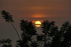 Silhouette des arbres au lever de soleil Photos stock