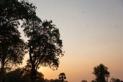 Silhouette des arbres contre le coucher de soleil dans de belles couleurs en pastel photographie stock