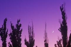 Silhouette des arbres contre le coucher du soleil/lever de la lune, Bowie, AZ photographie stock libre de droits