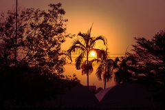 Silhouette des arbres de noix de coco et d'autres arbres avec le lever de soleil à l'arrière-plan au matin Photographie stock