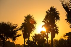 Silhouette des arbres de plam avec le coucher du soleil coloré et le ciel crépusculaire photographie stock libre de droits