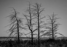 Silhouette des arbres en noir et blanc Image stock