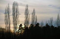 Silhouette des arbres et de la lampe Photo libre de droits