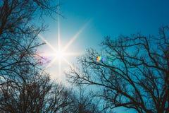 Silhouette des arbres sans feuilles sur Sunny Blue Photographie stock libre de droits