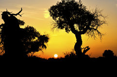 Silhouette des arbres sur le coucher du soleil Photographie stock libre de droits
