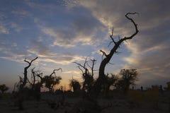 Silhouette des arbres sur le coucher du soleil Image libre de droits