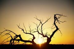 Silhouette des arbres sur le coucher du soleil Images stock