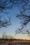 Silhouette des branches Image libre de droits