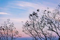 Silhouette des branches d'arbre avec le ciel gentil Photo stock
