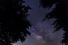 Silhouette des branches d'arbre dans la perspective du laiteux Photo stock
