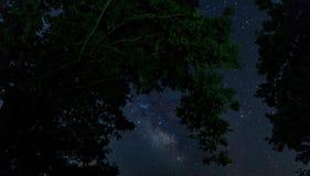 Silhouette des branches d'arbre dans la perspective du laiteux Photo libre de droits
