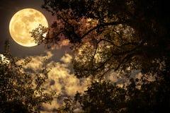 Silhouette des branches des arbres contre le ciel nocturne dans un f Photos stock