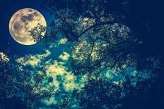 Silhouette des branches des arbres contre le ciel nocturne dans un f Images stock