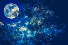 Silhouette des branches des arbres contre le ciel nocturne dans un f Photographie stock