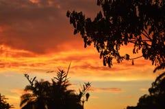 Silhouette des branches et des feuilles d'arbre images stock