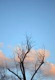 Silhouette des branches nues sur un fond des nuages Image libre de droits