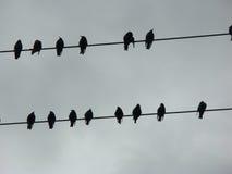 Silhouette des corbeaux sur un câblage téléphonique Photos stock