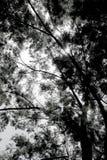 Silhouette des feuilles d'arbre Images libres de droits