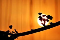 Silhouette des feuilles dans le premier plan sur l'horizon avec l'effet de couleur Photographie stock