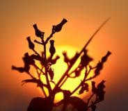 Silhouette des fleurs dans le premier plan sur l'horizon avec l'effet de couleur Image libre de droits