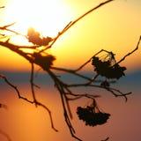 Silhouette des fleurs et des plantes sèches sur un coucher du soleil de fond Photo libre de droits
