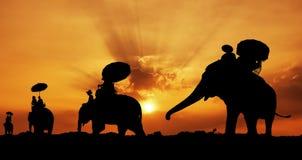 Silhouette des éléphants en Thaïlande Images libres de droits
