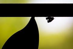 Silhouette des mouches de accouplement Image stock